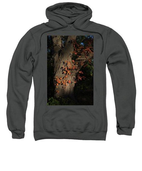 Ivy In The Fall Sweatshirt