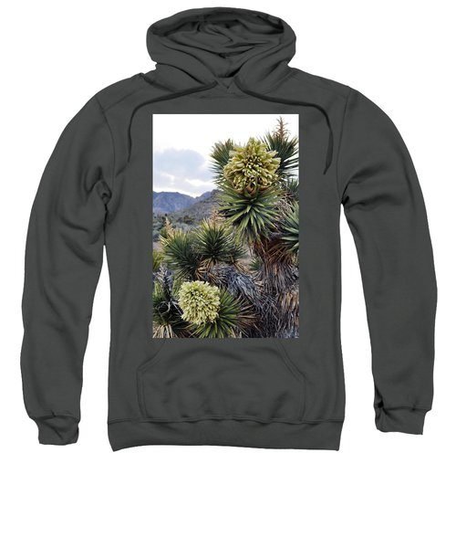 Joshua Tree Bloom Rainbow Mountain Sweatshirt