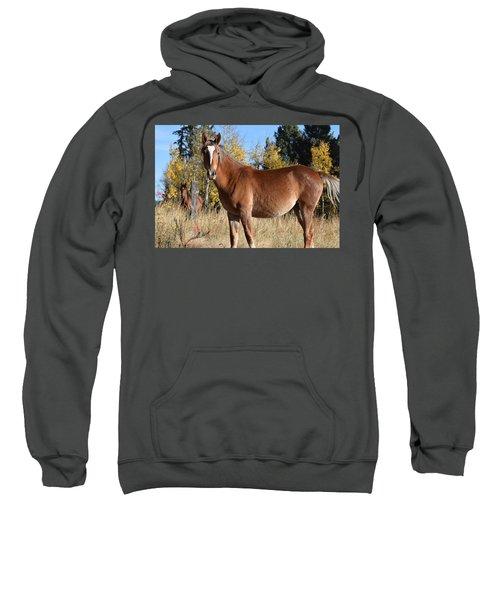 Horse Cr 511 Divide Co Sweatshirt
