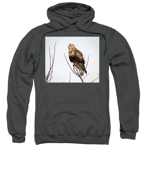 Juvenile Rough-legged Hawk  Sweatshirt by Ricky L Jones