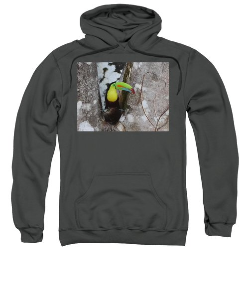 Keel-billed Toucan #2 Sweatshirt