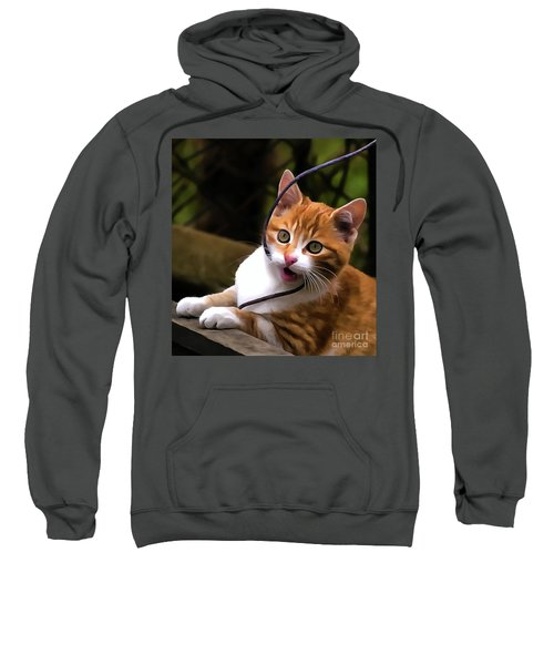 Kitten Portrait Player Sweatshirt