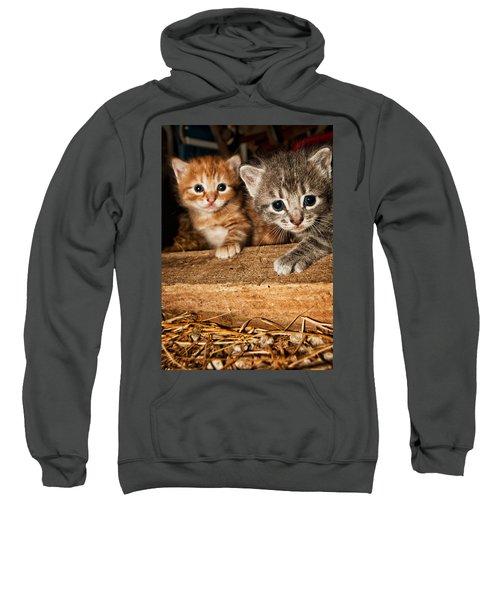Kittens Sweatshirt