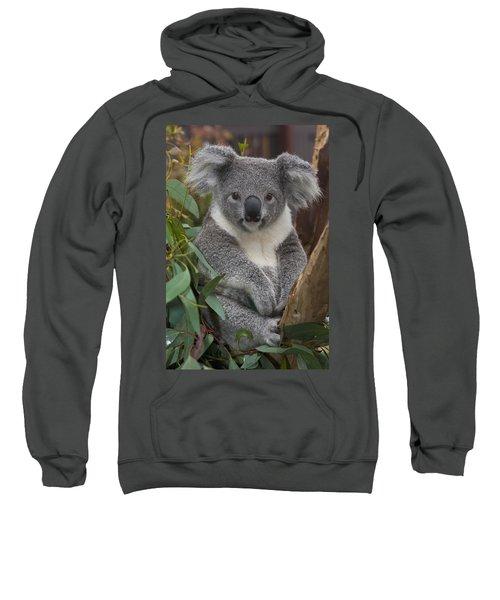 Koala Phascolarctos Cinereus Sweatshirt