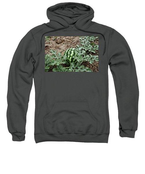 Ky Watermelon Sweatshirt