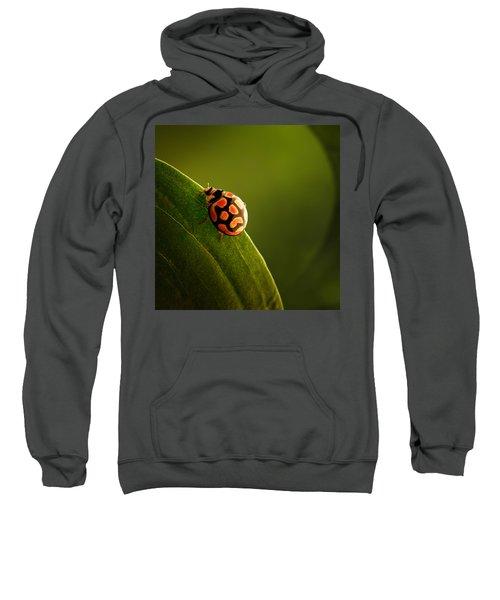Ladybug  On Green Leaf Sweatshirt