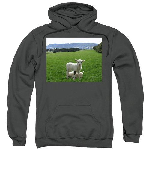 Lambs In Pasture Sweatshirt by Dominic Yannarella