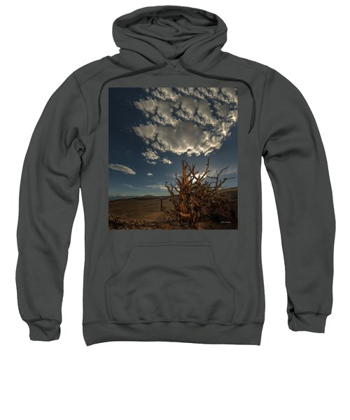 Late Afternoon In The Bristlecone Forest Sweatshirt