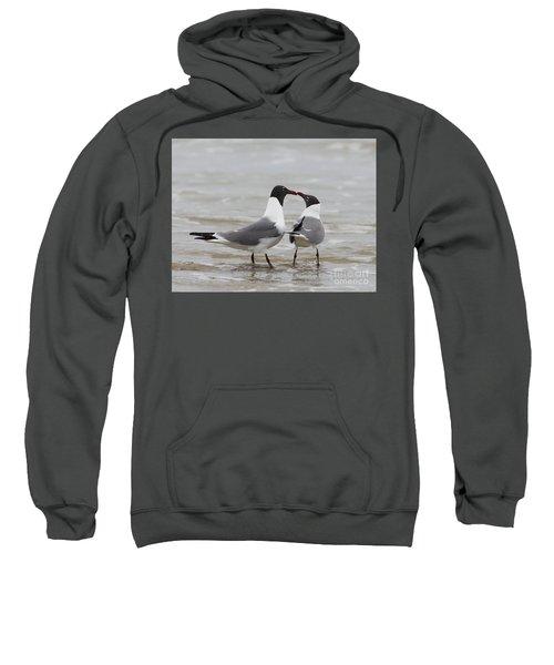 Laughing Gulls In Love Sweatshirt