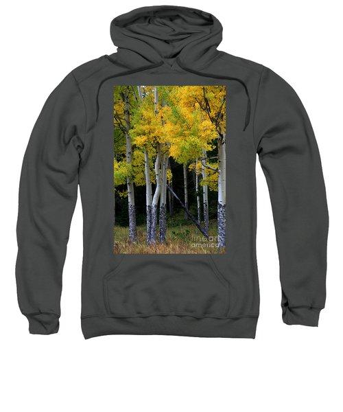 Leaning Aspen Sweatshirt