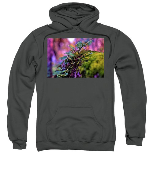 Leaves On A Log Sweatshirt