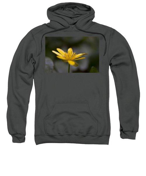 Lesser Celandine Sweatshirt