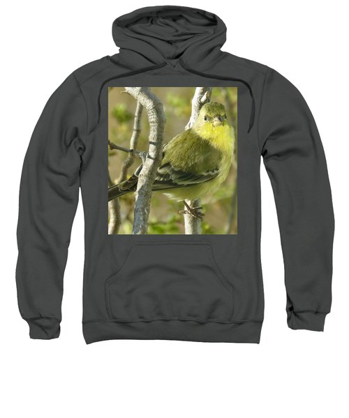 Lesser Goldfinch 1 Sweatshirt