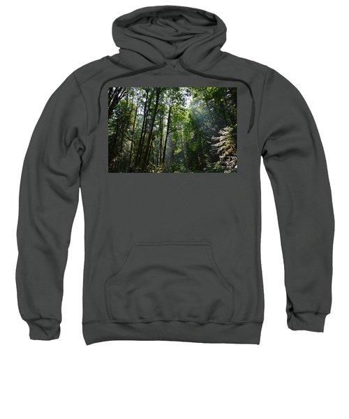 Light In The Forest Sweatshirt