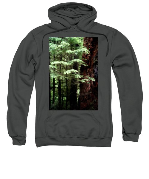 Light On Trees Sweatshirt