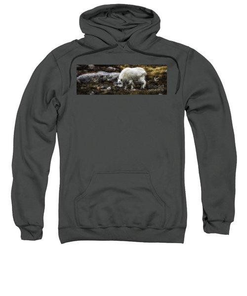 Lil' Kid Goat  Sweatshirt