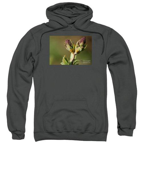 Lilac Bud Sweatshirt