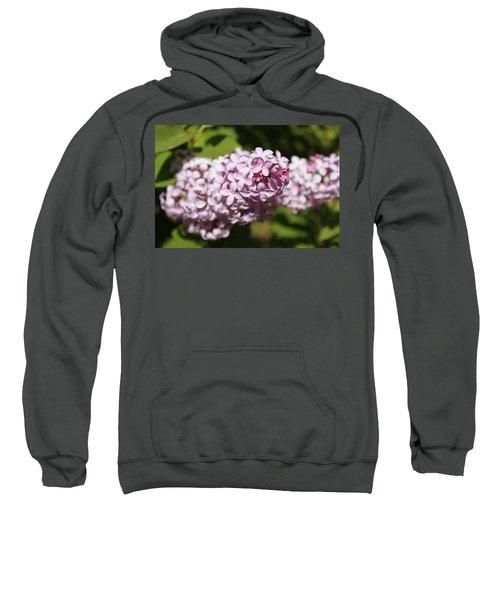 Lilacs 5549 Sweatshirt