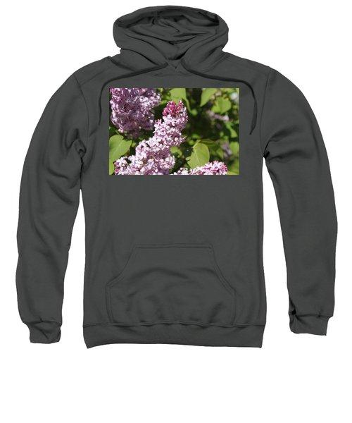 Lilacs 5552 Sweatshirt