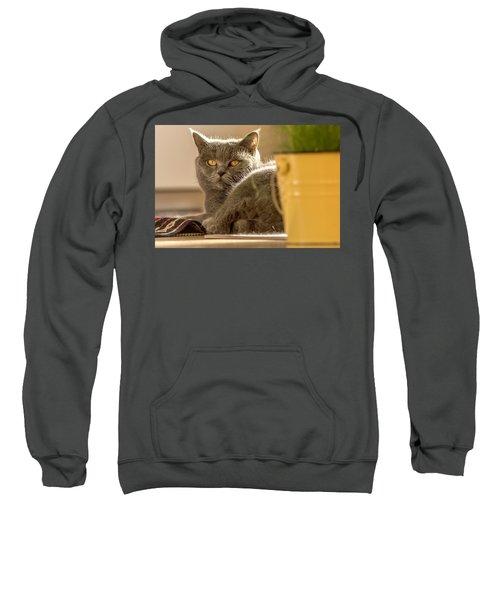 Lilli The Cat Sweatshirt