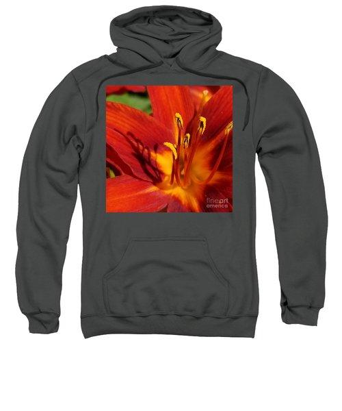 Lily Shadows Sweatshirt