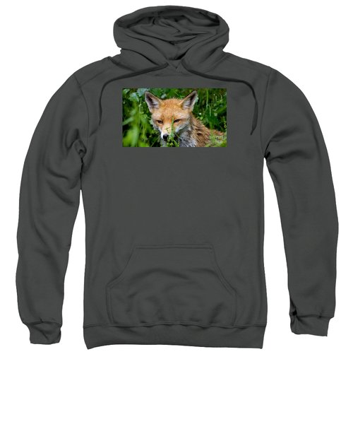 Little Baby Fox Sweatshirt