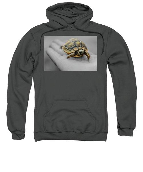 Little Turtle Baby Sweatshirt