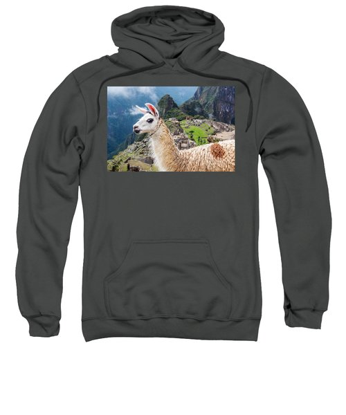 Llama At Machu Picchu Sweatshirt by Jess Kraft