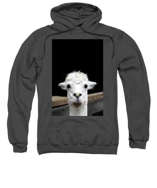 Llama Sweatshirt by Lauren Mancke