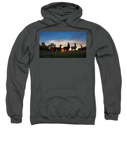 Llamas At Sunset Sweatshirt