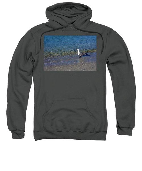 Lone Seagull At Miramar Beach In Naples Sweatshirt