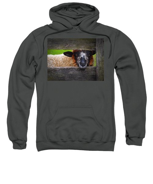 Lookin At Ewe Sweatshirt