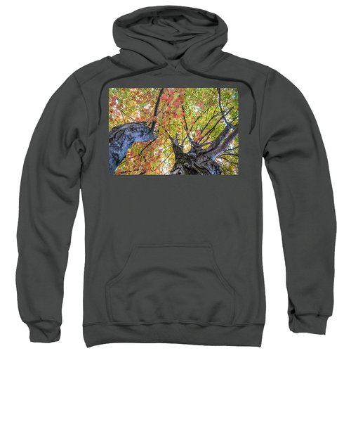 Looking Up - 9670 Sweatshirt