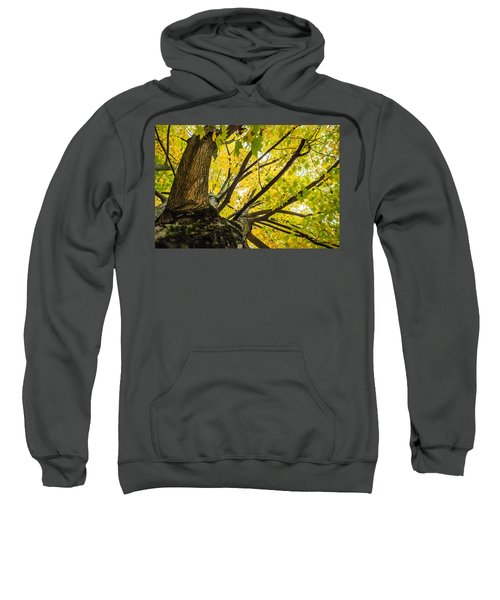 Looking Up - 9676 Sweatshirt