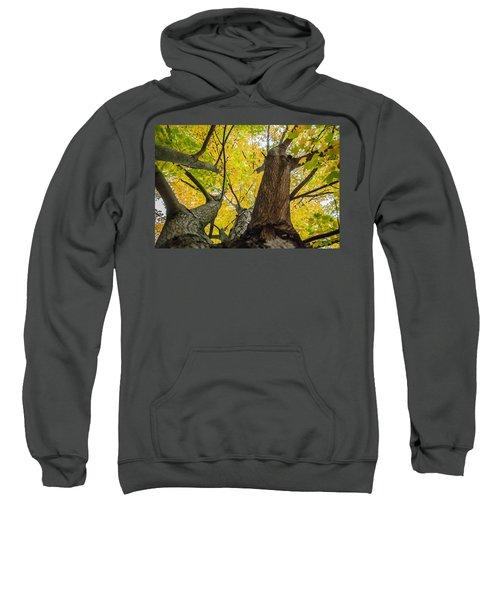 Looking Up - 9682 Sweatshirt
