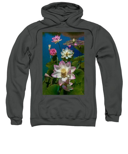Lotus Pool Sweatshirt