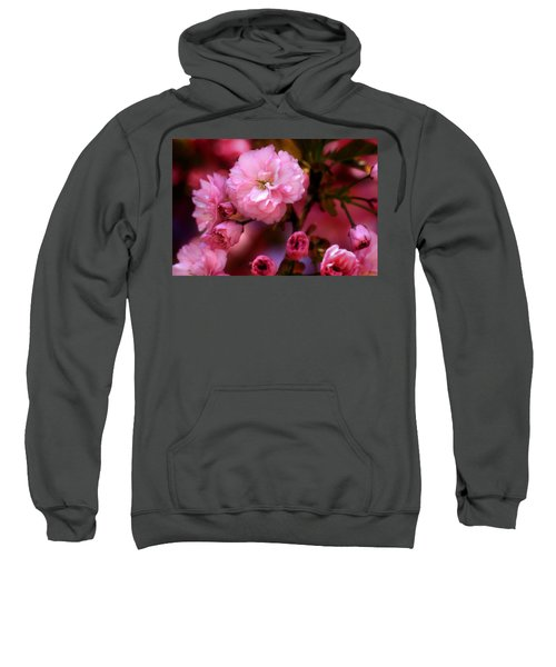 Lovely Spring Pink Cherry Blossoms Sweatshirt