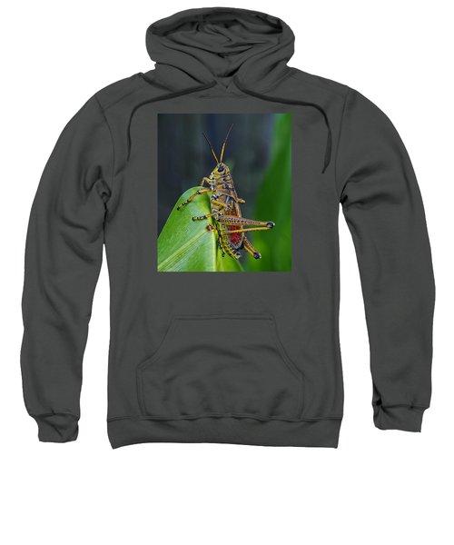 Lubber Grasshopper Sweatshirt