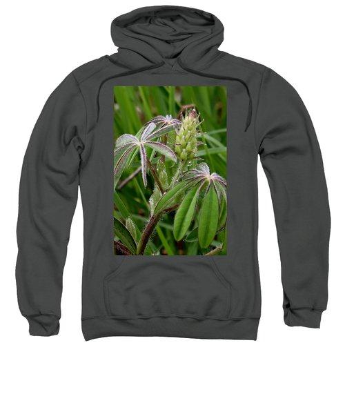 Lupine Bud Sweatshirt