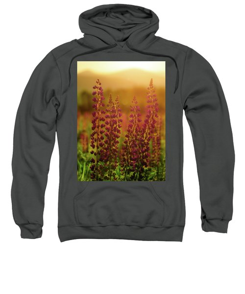 Lupines At Dawn Sweatshirt