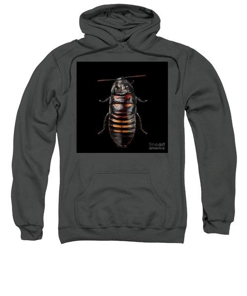 Madagascar Hissing Cockroach Sweatshirt