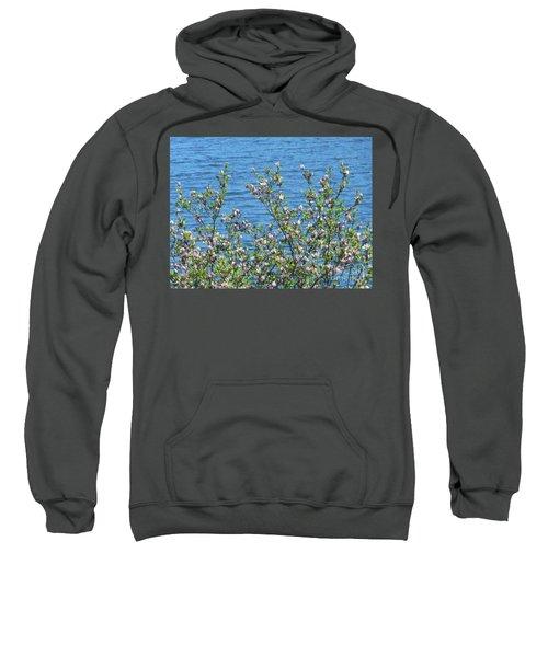 Magnolia Flowering Tree Blue Water Sweatshirt