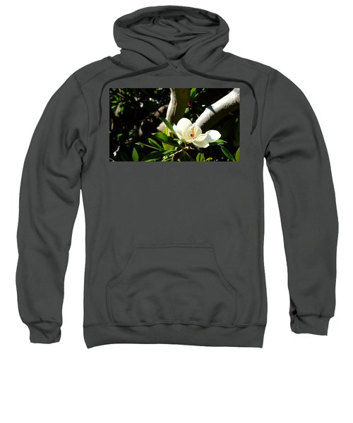 Magnolia Nest Sweatshirt