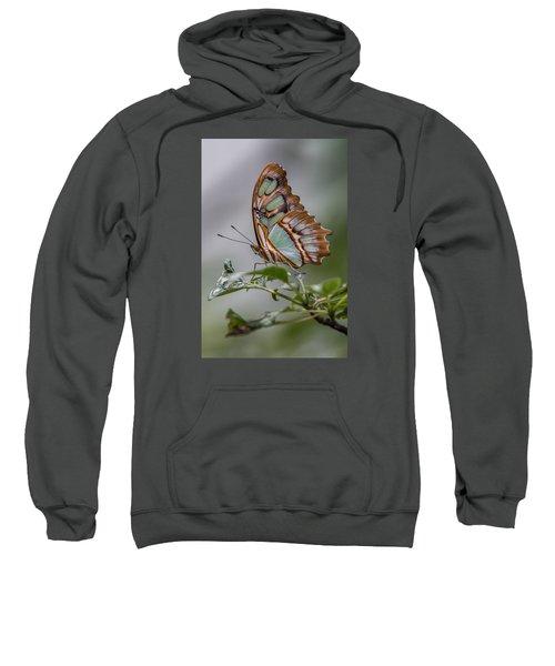 Malachite Butterfly Profile Sweatshirt