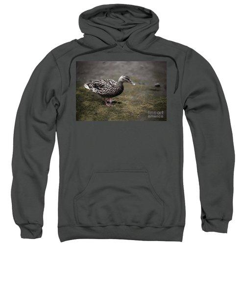 Malard,duckling Sweatshirt