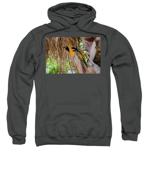 Male Hooded Oriole H17 Sweatshirt
