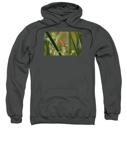Male Julia Heliconia Butterfly Sweatshirt