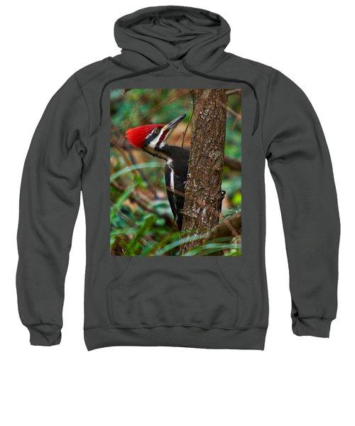 Male Pileated Woodpecker Sweatshirt