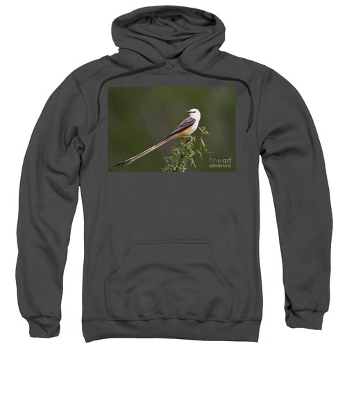 Male Scissor-tail Flycatcher Tyrannus Forficatus Wild Texas Sweatshirt