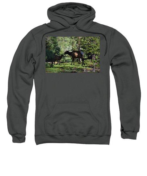 Elk Calf - Mother Rmnp Co Sweatshirt